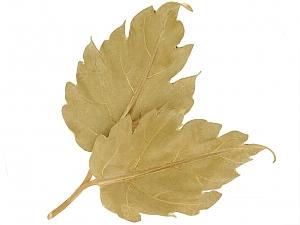 Buccellati Leaf Brooch in 18K